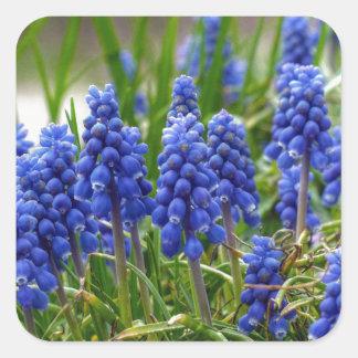 Grape Hyacinth Square Sticker