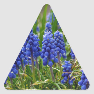 Grape Hyacinth Triangle Sticker
