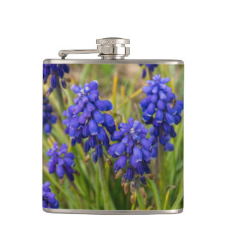 Grape Hyacinths Family Hip Flask