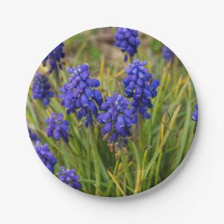 Grape Hyacinths Family Paper Plate