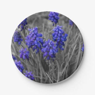 Grape Hyacinths Family Select Paper Plate