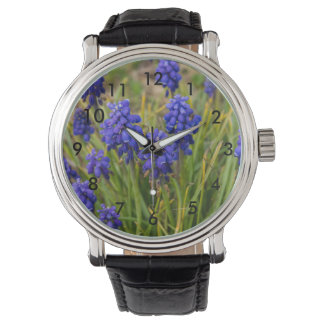 Grape Hyacinths Family Watch
