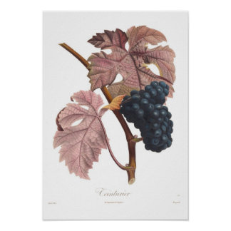 Grape,Teinturier Poster