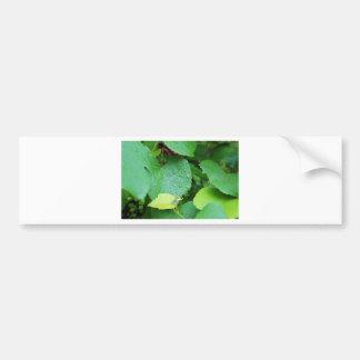 Grape Vine Bumper Sticker