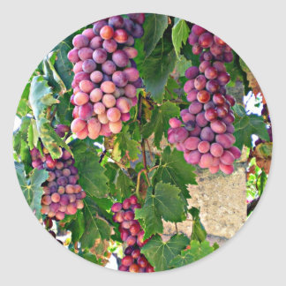 Grape Vine Classic Round Sticker