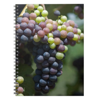 Grapes Notebook
