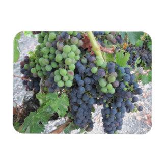 Grapes on the Vine, Aron Hill Vineyard Vinyl Magnets