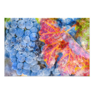 Grapes on the Vine in the Autumn Season Photograph