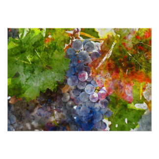 Grapes on the Vine in the Autumn Season Poster