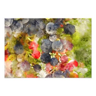 Grapes on the Vine ready to make Wine Art Photo