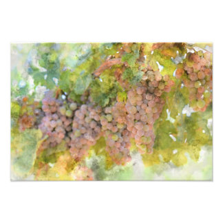 Grapes on the Vine ready to make Wine Photo Print