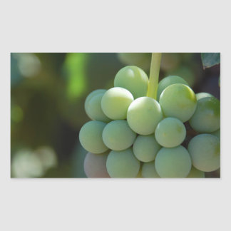 Grapes on the Vine Rectangular Sticker