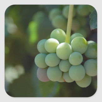 Grapes on the Vine Sticker
