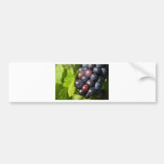 Grapes on vine bumper sticker