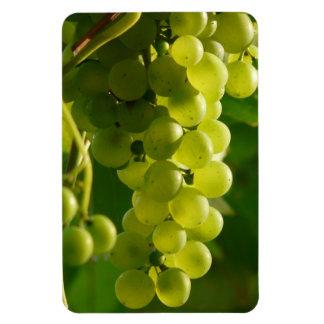 Grapes Vinyl Magnets