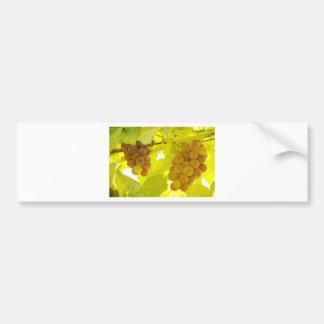 Grapes Vine Fine Art Bumper Sticker