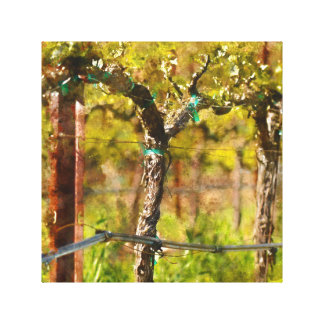 Grapes Vines in Spring Canvas Print