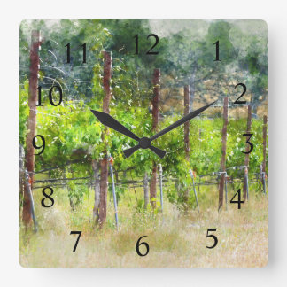 Grapes Vines in Spring in Napa Valley California Square Wall Clock