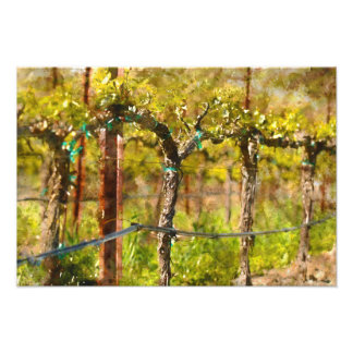 Grapes Vines in Spring Photograph