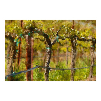 Grapes Vines in Spring Poster