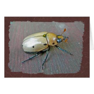 Grapevine Beetle (Pelidnota punctata) Series Card