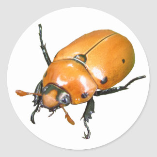 Grapevine Beetle ~ sticker