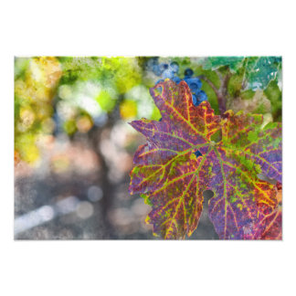 Grapevine in the Autumn Season Photo Print