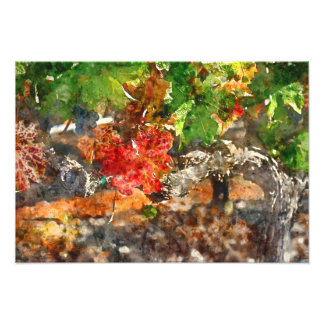 Grapevine in the Autumn Season Photograph