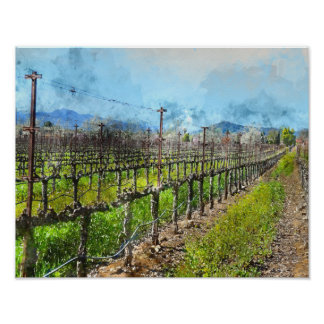 Grapevines in a Row in Napa Valley California Poster