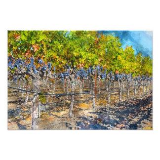 Grapevines in Napa Valley California Photo Print