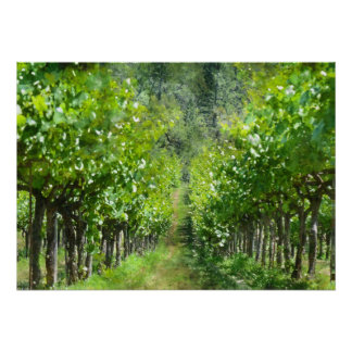 Grapevines in Spring in Napa Valley California Poster