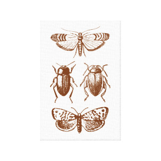 Graphic Insects Canvas Print