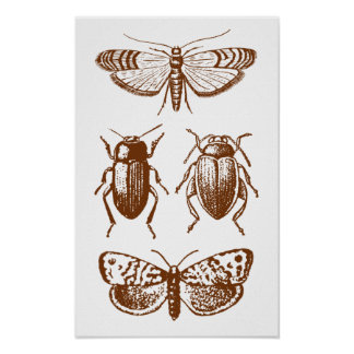 Graphic Insects Poster