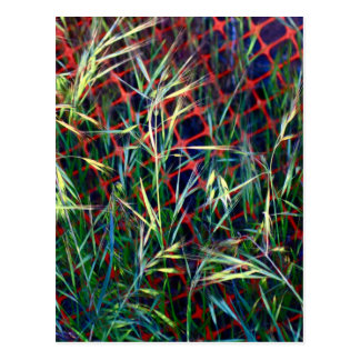 Grass and Plastic Postcard