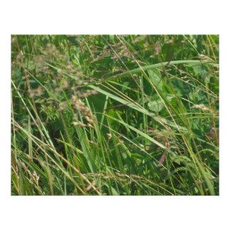 Grass Art Photo