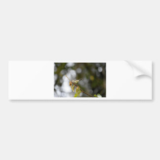 GRASS BIRD QUEENSLAND AUSTRALIA BUMPER STICKER