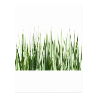 Grass Blades Nature Abstract Shapes Fashion style Postcard