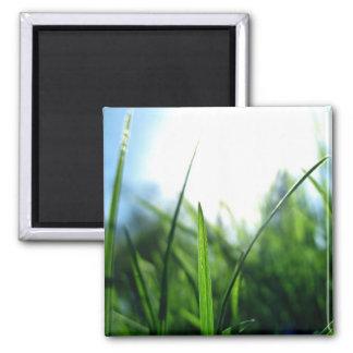 Grass & blue sky magnet