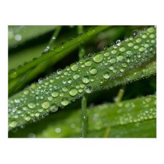 Grass Dew Postcard