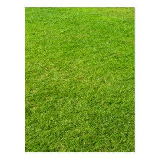 Grass field postcard