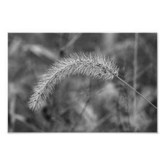Grass in B&W Photograph