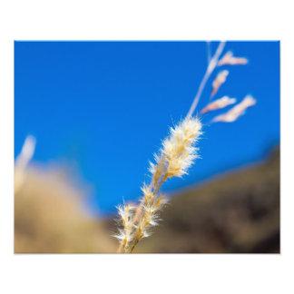 Grass in the Hills of Peru Art Photo