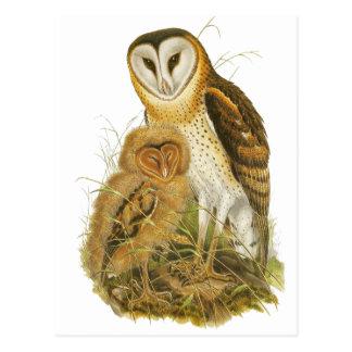 Grass Owl Postcards