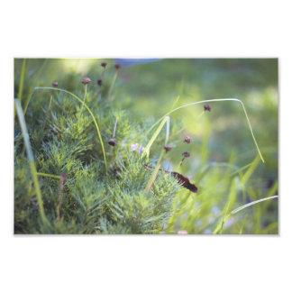 Grass Photography Photo Art