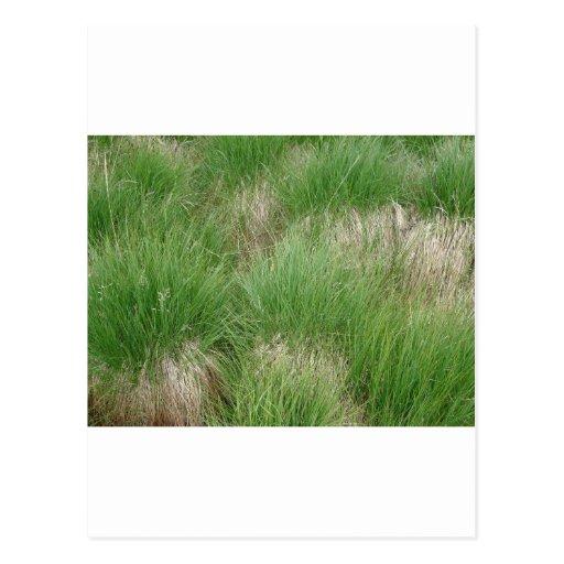 Grass Postcard