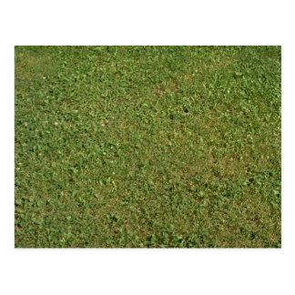 Grass Post Card
