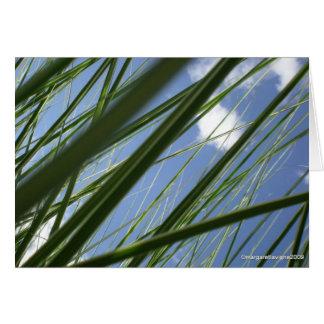 Grass Prism  - Notecard