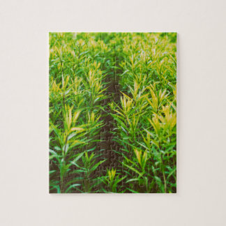 grass puzzles