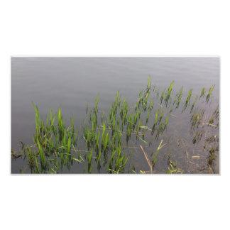 Grass Reflection Photo Print