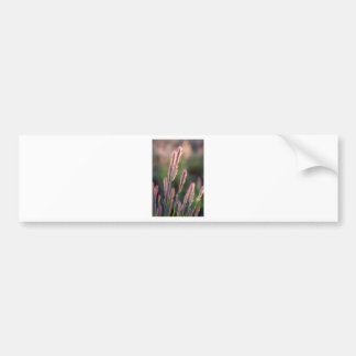 Grass seed heads bumper sticker